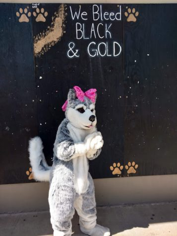 Photo of Helen Husky